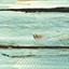 maritimo pine 0216